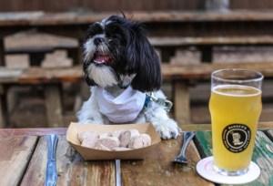 Portugal regula la entrada de mascotas en locales de hostelería 3