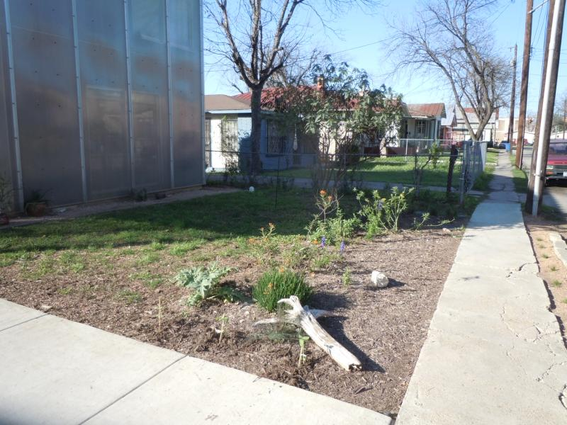 In Lavaca: former St. Augustine yard en route to butterfly garden