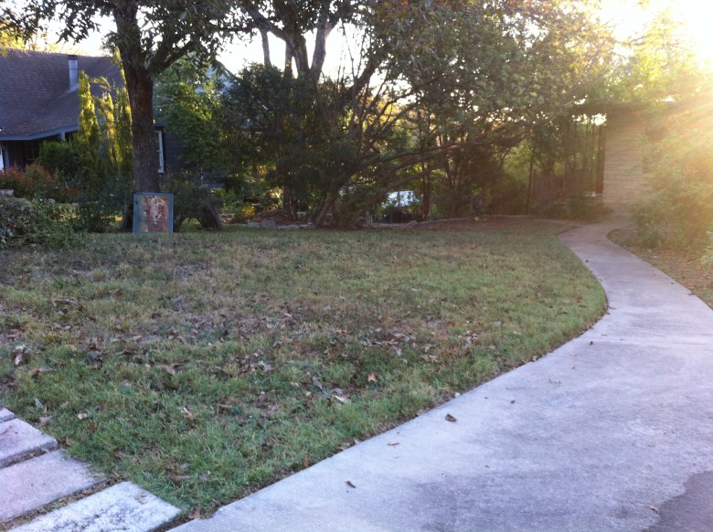 Travis Height in Austin:  from crummy Bermuda grass and weeds to....
