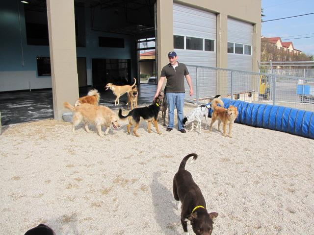 Max Golman, Owner of Lucy's Doggy Daycare lets the dogs out