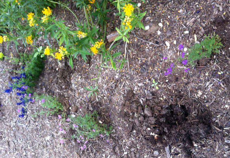 Stolen verbena plant in Lavaca