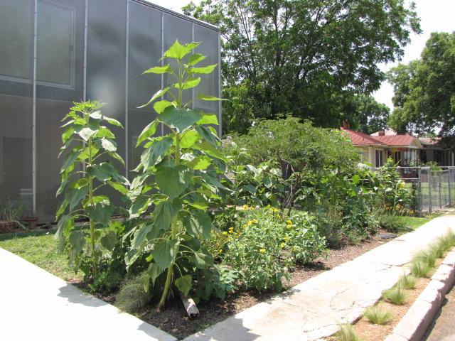 Lavaca garden: May 2012