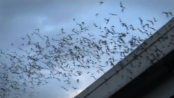 San Antonio River Bats