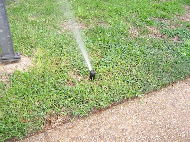 Automatic sprinkler on St. Augustine grass