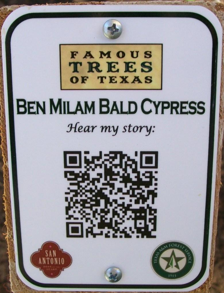 Ben Milam Bald Cypress Tree Gets QR Code