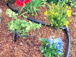 Drip irrigation: the next big thing. Photo courtesy City of Frisco
