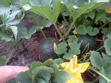 Lush garden bounty at International Community Garden. Photo courtesy of International Community Garden