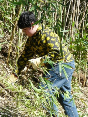 """A member of """"Team Panda"""" clears out a wall of invasive Bamboo at the Japanese Tea Garden. Photo courtesy of Parks and Recreation, City of San Antonio."""