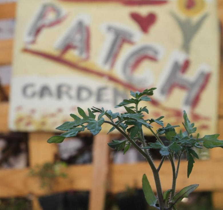 Growth at the Little Patch Garden. Photo by Spencer Coolie.