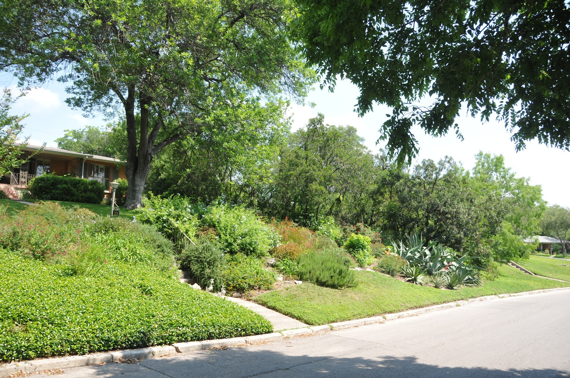 Lush landscaping, common in Bel Meade (unfortunately not my yard).