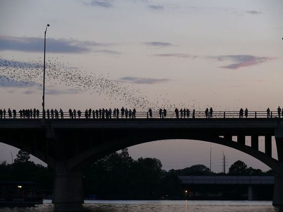 Emergence of the bats of the Congress Avenue Bridge in Austin, Texas at dusk. Photo courtesy of Wikimedia Commons user Peter.