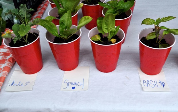 LocalSprout seedlings on sale at the Main Plaza Farmers Market. Photo by Iris Dimmick.