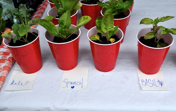 LocalSprout seedlings ready for purchase. Photo (and signage) by Iris Dimmick.