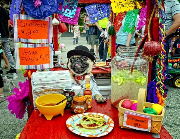 The 2013 Fiesta Pooch Parade. Image courtesy of FIESTA® SAN ANTONIO COMMISSION/©JONATHAN ALONZO PHOTOGRAPHY