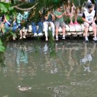 A family of ducks swims down the San Antonio River before the 2014 Spurs Championship River Parade on June 30, 2014. Photo by Iris Dimmick.
