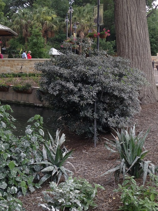 The San Antonio Zoo has had to close off a section of its grounds due to an unsafe amount of egret droppings. Photo by Brooke Ramos.