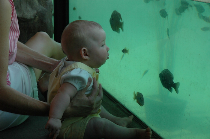 Kronkosky's Tiny Tot Nature Spot at the San Antonio Zoo consists of seven major areas with a total of 19 sub areas. Photo courtesy of the Kronkosky Foundation.
