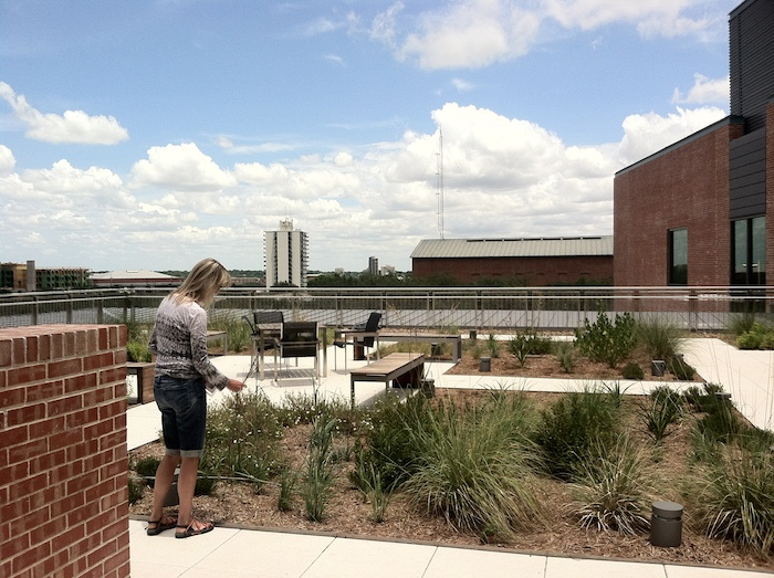 Biology professor Dr. Kelly Lyons tends the Center's rooftop garden. The garden's inhabitants are all plants native to central Texas. Photo by Samuel Jensen.