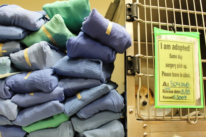 ACS surgery packs are made available to the shelter. Photo courtesy of Animal Care Services.