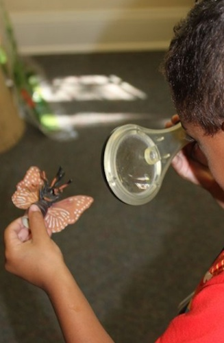 Butterfly science at The Acorn School. Courtesy photo.