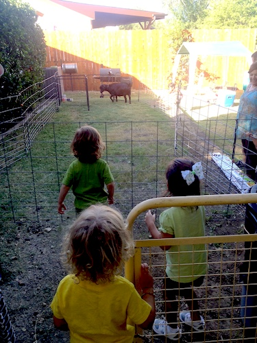 Children at a petting zoo. Photo by Anna CohenMiller.