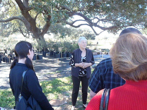 Sandy Winokur talks olives and oils with a group of tour-goers at the Sandy Oaks Orchard.