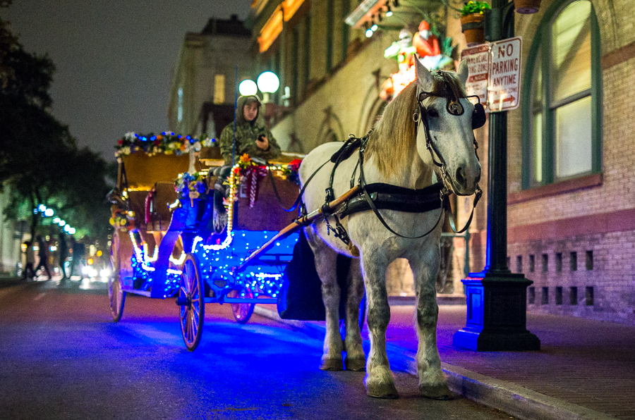 A horse waits with its driver for a fare on New Years Eve in San Antonio. Photo by Scott Ball.