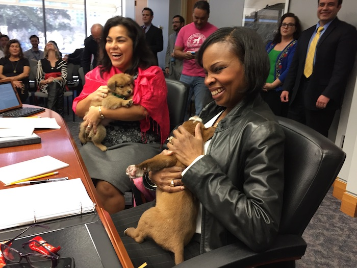 Rebecca Viagran (D3) and Mayor Ivy Taylor take a break from official business to play with rescued puppies. Photo by Robert Rivard.