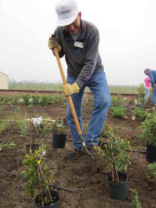 Eugene Wulf, Bexar County Master Gardener, volunteers at the drought simulator. Photo by Karen Stamm.