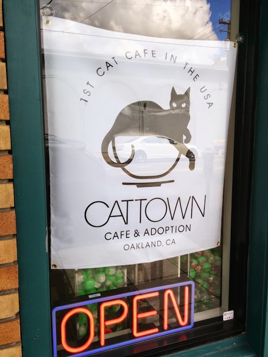 Cat cafes –another San Francisco amenity. Photo by Jeremy Wagner-Kaiser.