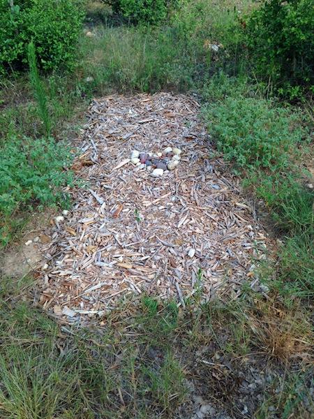 A gravesite in Eloise Woods. Photo courtesy of Ellen Macdonald.