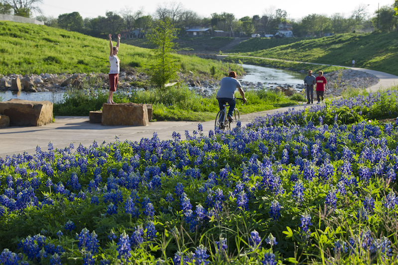 Bluebonnets brighten the trail along the Mission Reach. Photo by Al Rendon/SARA.