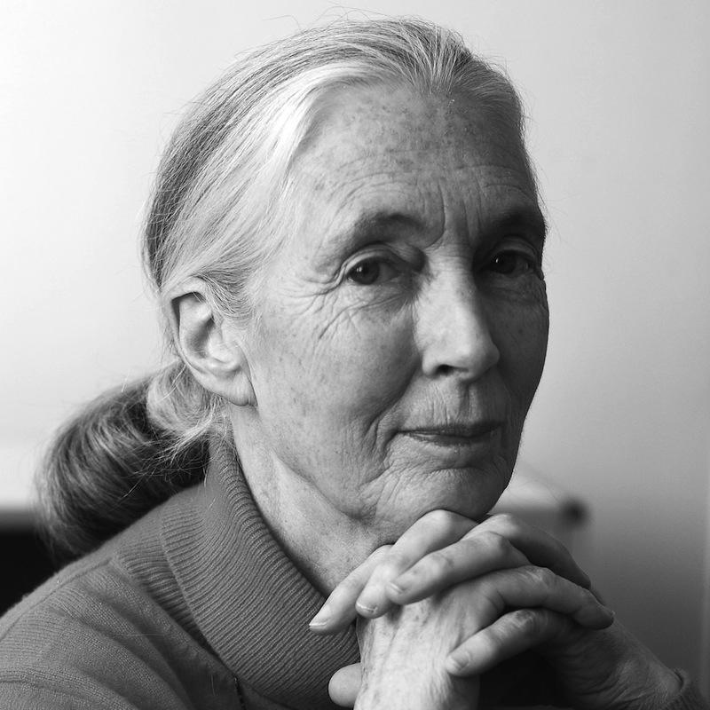 Jane Goodall. Photo by David S. Holloway.