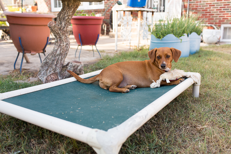 Daisy is one of the three dogs that are mainstays of the Gonzales family.