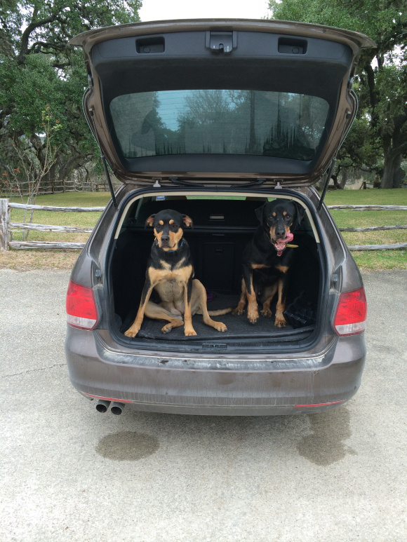 Christmas 2013 at the Ranch. The McNeel family dogs in the back of their 2013 Volkswagen Jetta Sportwagen TDI. Photo by Bekah McNeel