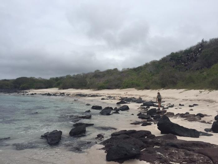 Otto strolls down a small beach on Isla San Cristobal, Galàpagos. Photo by Everett Redus.