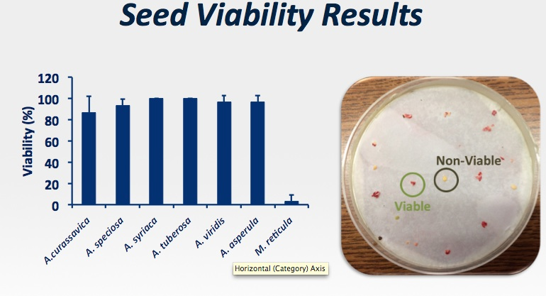 UTSA is studying six different types of native milkweeds, and the non-native Asclepias curassavica, Tropical milkweed. Graphic courtesy UTSA.