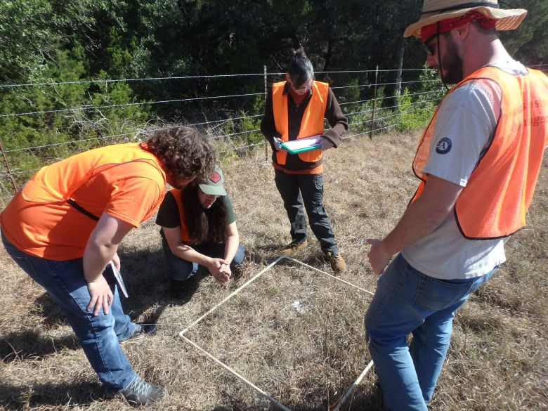 UTSA students monitor for milkweed
