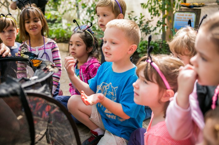 San Antonio Zoo School children look at a Monarch butterfly, whose population has tripled since last year. Photo by Kathryn Boyd-Batstone