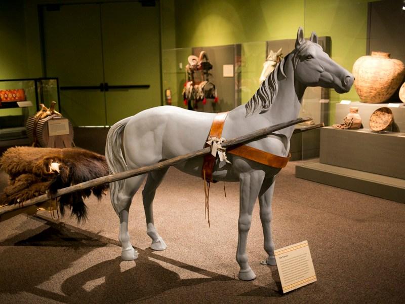 The horse evolved in the San Antonio region. Photo by Kathryn Boyd-Batstone