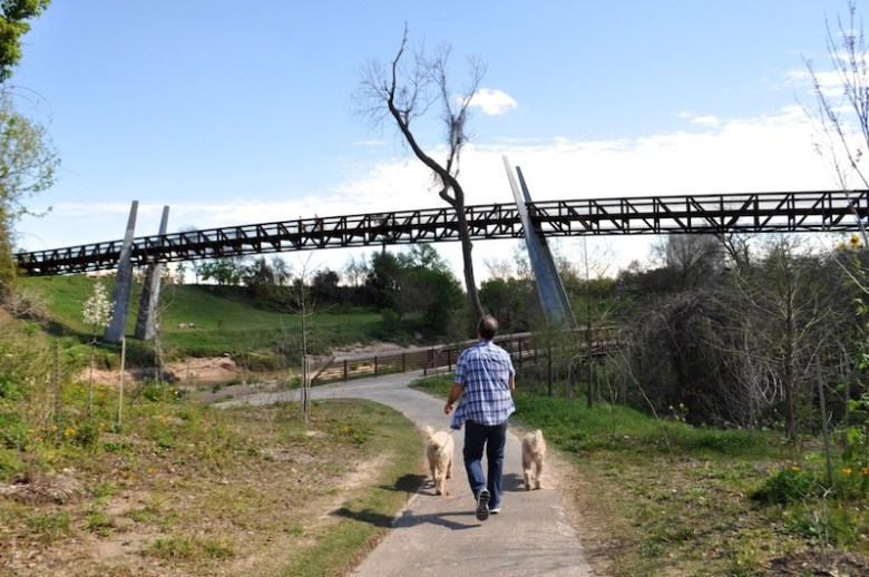 A man walks his dogs along Buffalo Bayou. The pedestrian bridge is one of the longest in the city. Photo by Iris Dimmick.