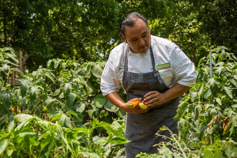 Chef Johnny Hernandez picks produce from his home garden. Photo by Scott Ball.