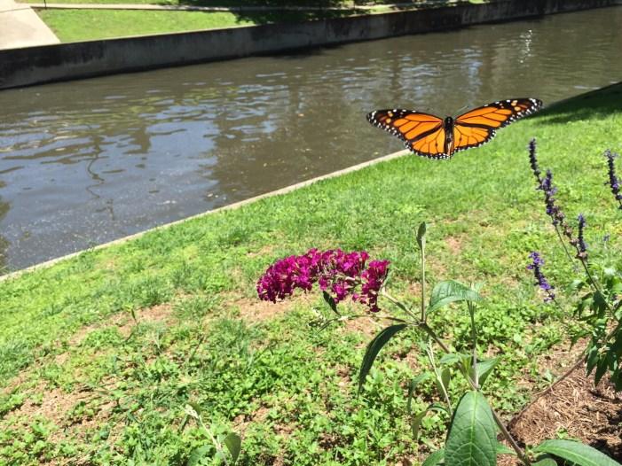 monarch nueva st. bridge