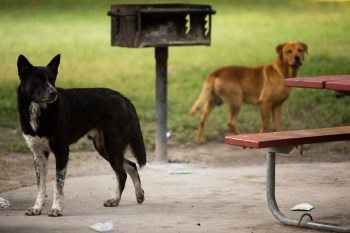 Stray dogs have made a home near a park bench at Brackenridge Park. Photo by Scott Ball.