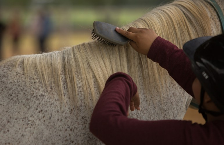 Participants use brushes to comb the hair of a horse. Photo by Scott Ball.