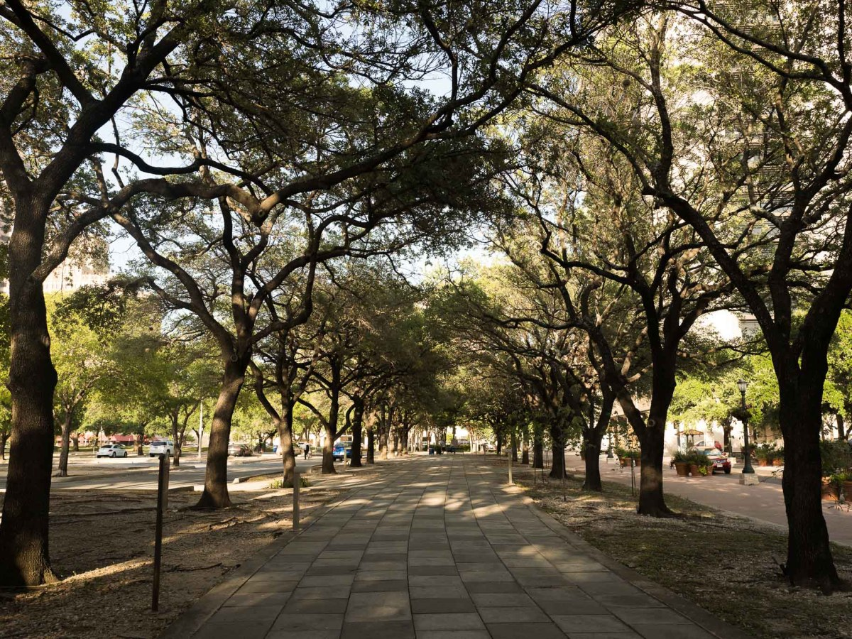 The live oak tree allée outside the proposed Frost Bank Tower on Houston Street. Photo by Scott Ball.