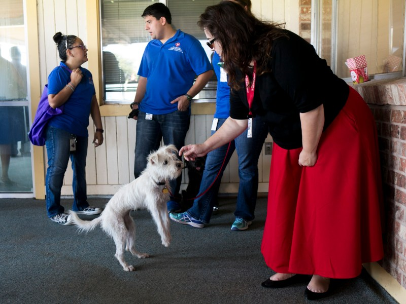 City of San Antonio Animal Care Services brought dogs to the Greenline groundbreaking. Photo by kathryn Boyd-Batstone.