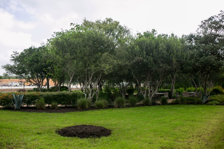 The location where the Survivor Tree will be planted on Sept. 11. Photo by Kathryn Boyd-Batstone.