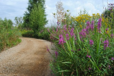 Wildflowers along a dirt road at Cibolo Nature Center. Courtesy Cibolo Nature Center and Farm.