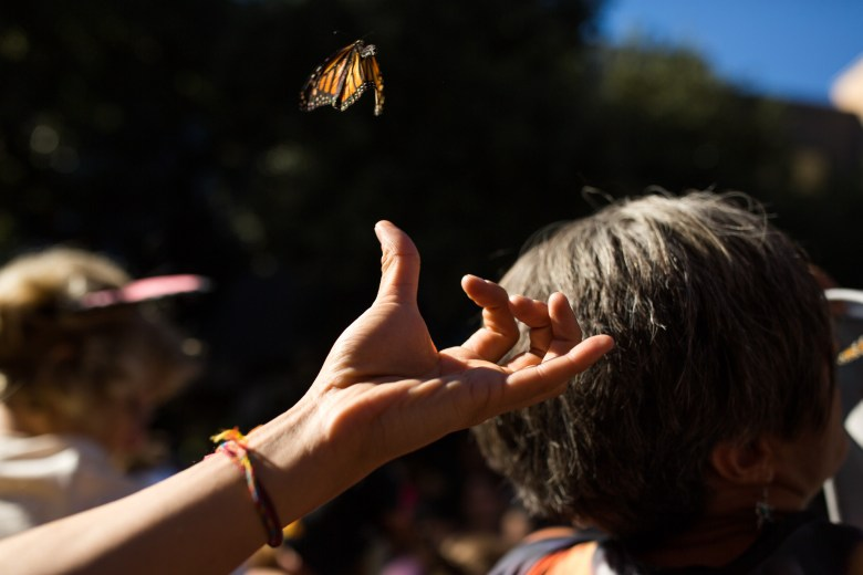 A butterfly spreads its wings and flies off of a hand.
